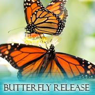 Butterfly_Main